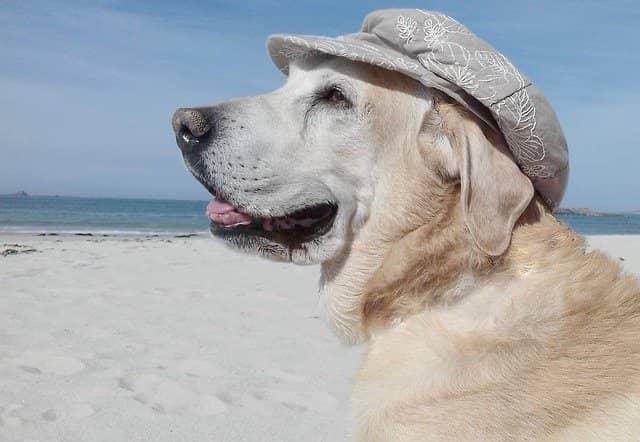 8 consejos para viajar con su perro