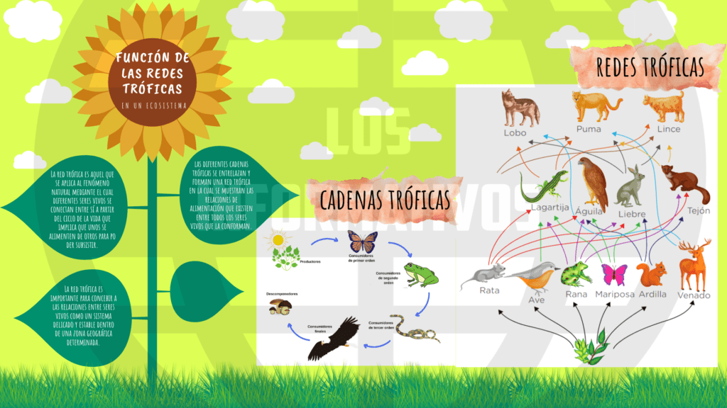 Es importante que organices la información en una infografía que explique cómo es la función de las redes tróficas en un ecosistema. Esta será publicada en el periódico mural. También puedes escribir en tu cuaderno u hojas, o grabar un audio.