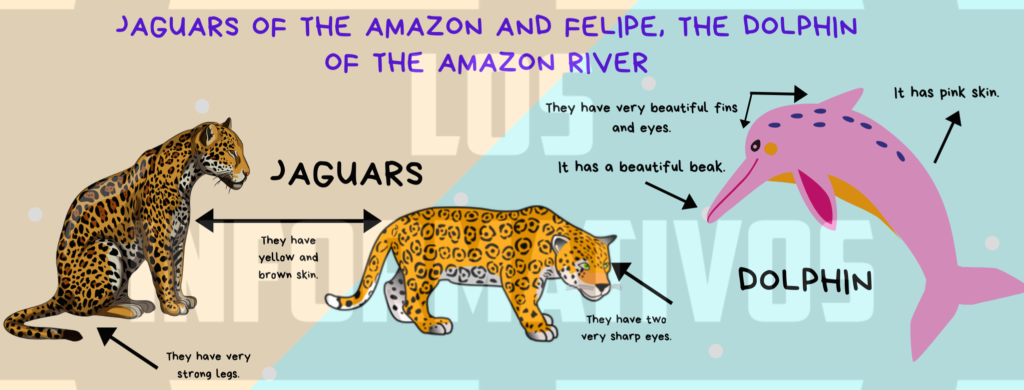 """Option A: Fact sheets about jaguars and Felipe, the dolphin. Step 1: Look at the animals in the photos: Step 2: Choose the correct characteristics for the jaguars and for """"Felipe the dolphin"""" from the boxes. Step 3: Use """"have"""" and """"has"""" to make sentences about jaguars and Felipe, the dolphin. Use the words from Step 2. Step 4: Write the animals fact sheets including a picture of them. Option B: Fact sheets about two endangered animals from your region. Step 1: Research about two endangered animals from your region. Step 2: Organise the characteristics of each animal in these graphic organisers. Step 3: Draw the animals and label the parts of their bodies. Use """"have"""" or """"has"""". Step 4: Write the animals fact sheets including the pictures. For option A or B, you can use the suggested template: Suggested template:"""