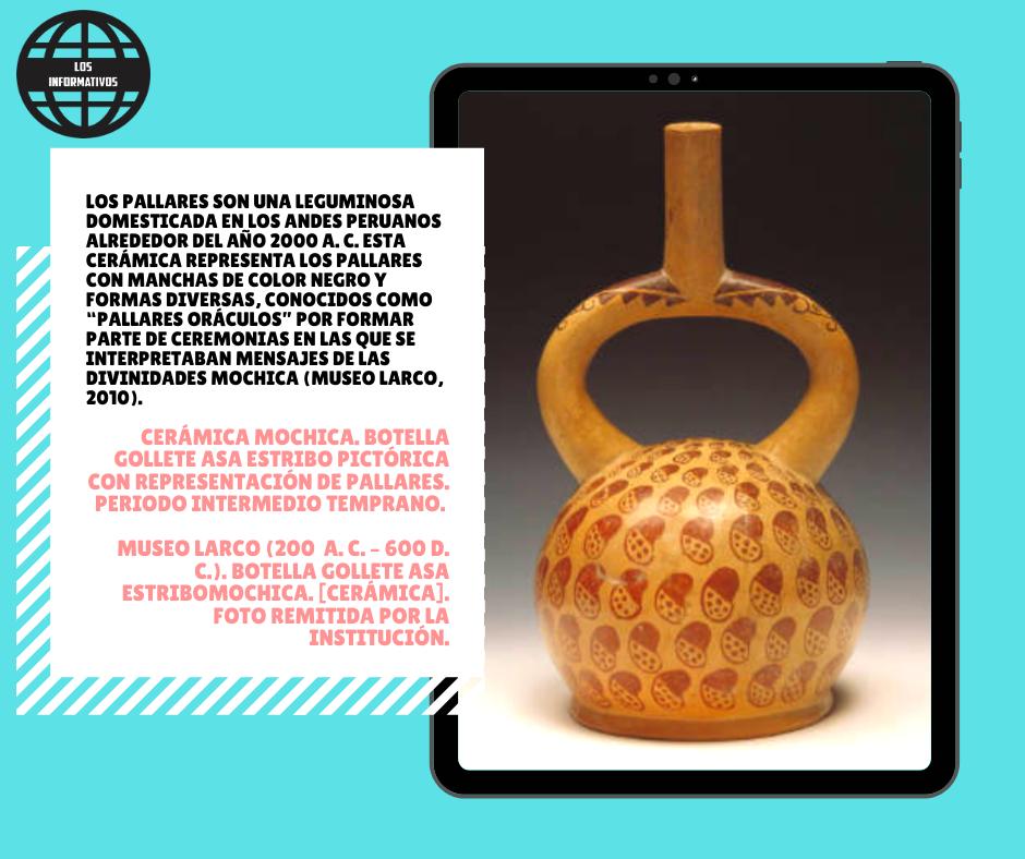 """Los pallares son una leguminosa domesticada en los Andes peruanos alrededor del año 2000 a. C. Esta cerámica representa los pallares con manchas de color negro y formas diversas, conocidos como """"pallares oráculos"""" por formar parte de ceremonias en las que se interpretaban mensajes de las divinidades mochica (Museo Larco, 2010)"""